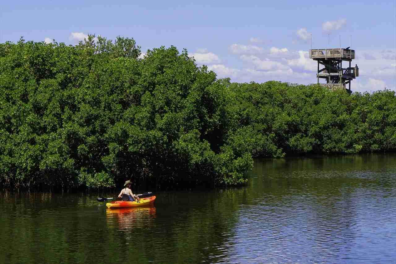 美しいマングローブ林とボートの写真